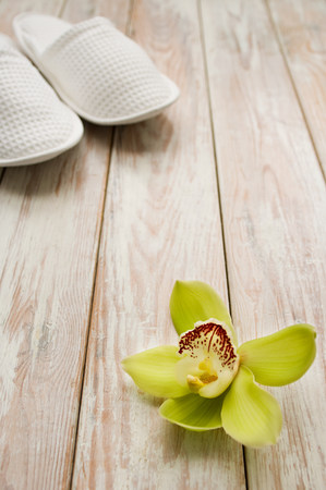 Orchid flower and slippers LANG_EVOIMAGES