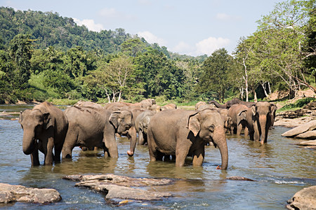 plains indian: Herd of elephants in watering hole LANG_EVOIMAGES
