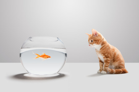 Gatito mirando peces de colores en un tazón LANG_EVOIMAGES