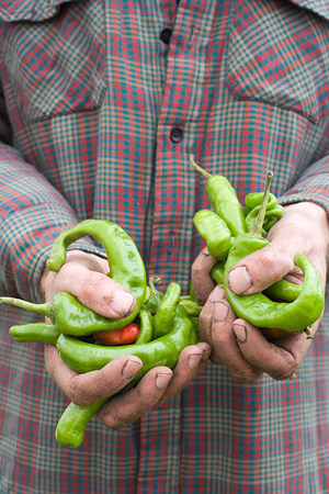 Farmer holding chilli peppers LANG_EVOIMAGES
