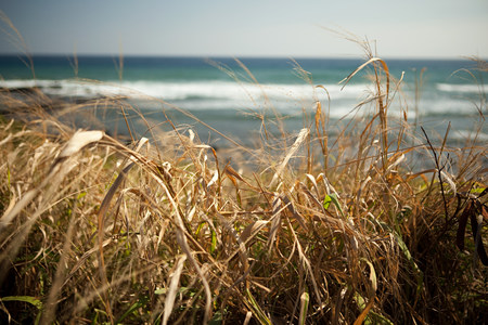 Marram grass and sea