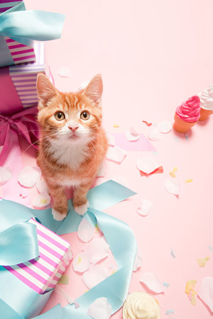 housecat: Kitten and gifts