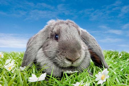 sweet grasses: Rabbit on grass LANG_EVOIMAGES