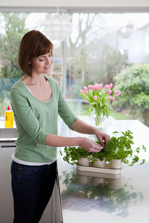 Woman taking herbs from plant