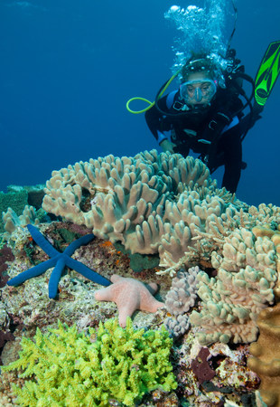 stony coral: Coral reef scenic.