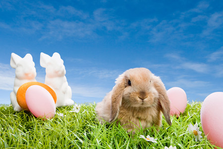 sweet grasses: Rabbit at easter LANG_EVOIMAGES