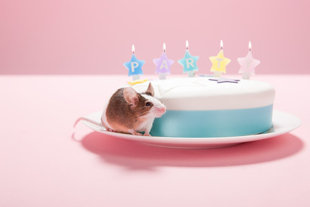 Mouse with party cake LANG_EVOIMAGES