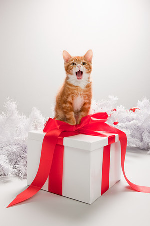 christmas pussy: Kitten on a christmas gift box