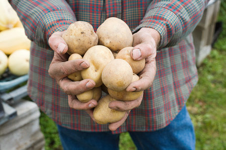 checker: Farmer holding potatoes LANG_EVOIMAGES