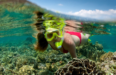 stony coral: Snorkeler on coral reef.