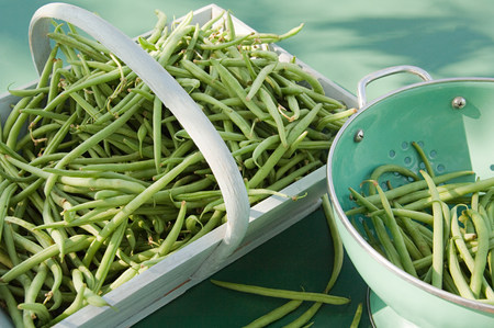 Green beans LANG_EVOIMAGES