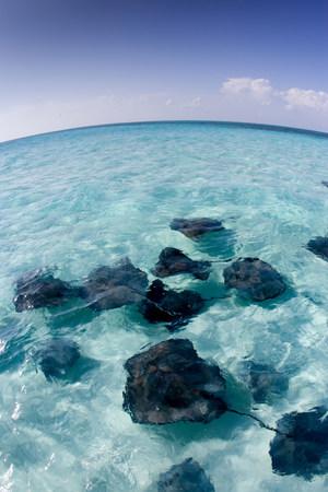 stingrays: Stingrays, Grand Cayman. LANG_EVOIMAGES