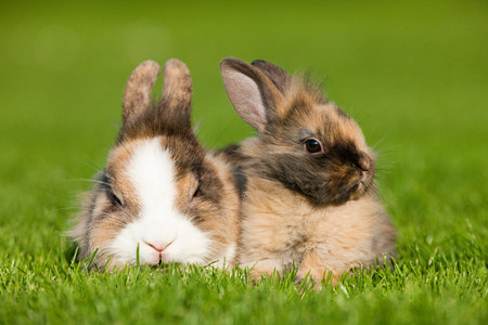plants species: Due conigli seduti sull'erba