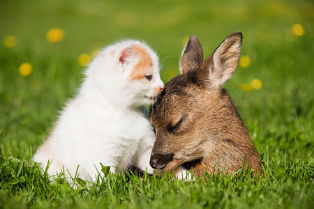 sweet grasses: Fawn and kitten sitting on grass LANG_EVOIMAGES