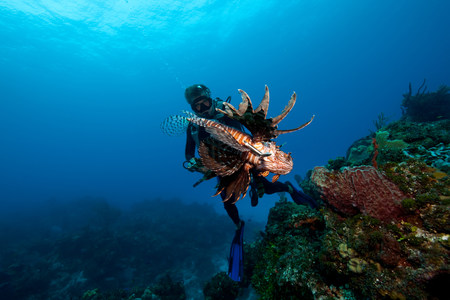 Diver and Invasive Species LANG_EVOIMAGES