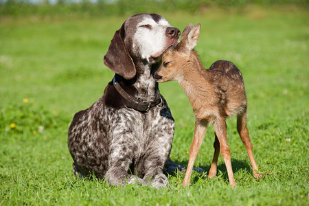 Fawn and dog sitting on grass LANG_EVOIMAGES
