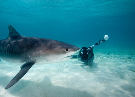 bahama: Photographer and Tiger Shark. LANG_EVOIMAGES
