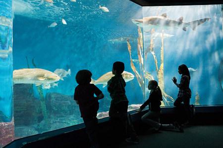 impressed: Children watching fish in aquarium LANG_EVOIMAGES