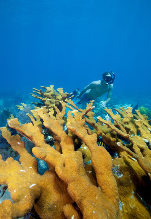 Male snorkeler on coral reef