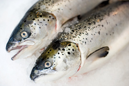 Two trout side by side on ice LANG_EVOIMAGES