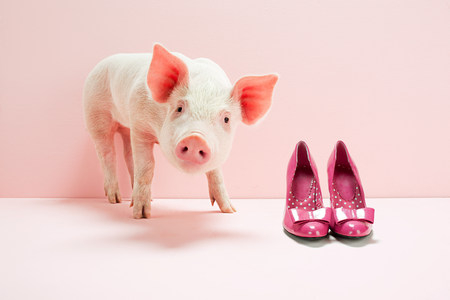 trashy: Piglet next to shoes in pink studio LANG_EVOIMAGES