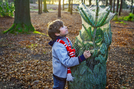 Boy holding Christmas tree in forest