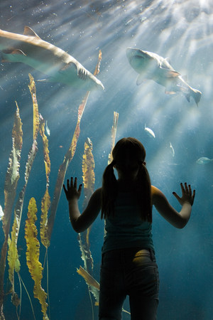 ponderous: Girl watching sharks in aquarium