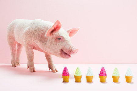 curiousness: Piglet next to row of toy ice cream cones, studio shot