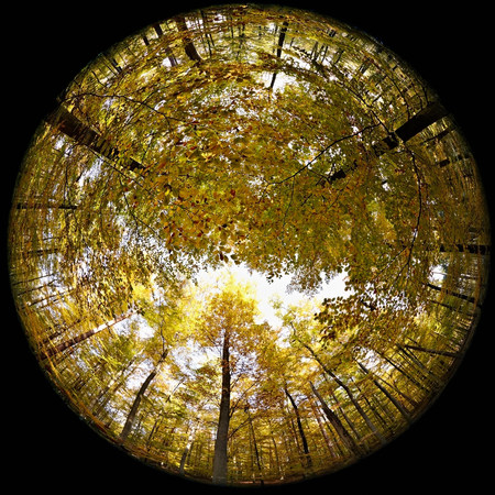 tallness: Fisheye perspective of trees in forest
