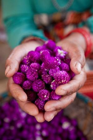 purples: Woman holding dyed flowers, Kathmandu, Nepal