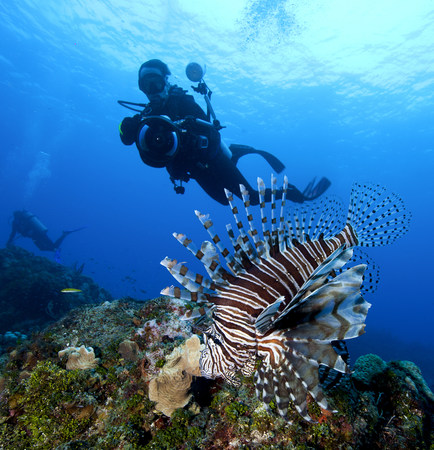 Photographer and Lionfish