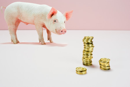 coins shot in golden color: Piglet looking at stack of gold coins in studio