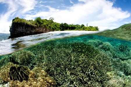 split level: Overunder of coral reef