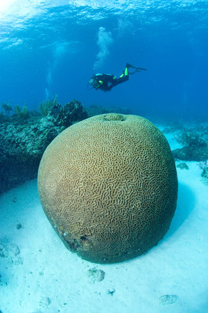 rounded circular: Scuba diver on coral reef