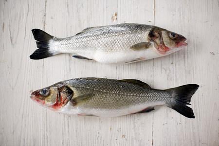 environmentalism: Two fresh salmons