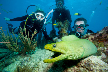 intimidated: Divers with moray eel