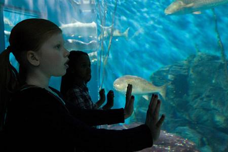 afro caribbean ethnicity: Girls staring at fish in aquarium