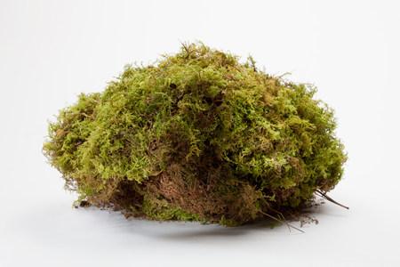 mosses: Lump of moss