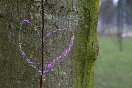 defaced: Broken heart drawn on a tree trunk