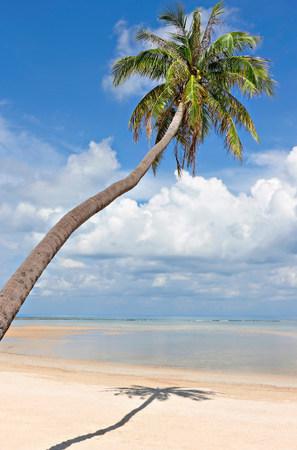 Palm tree on deserted Natien Beach,Koh Samui,Thailand LANG_EVOIMAGES