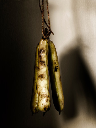 muddy: Broad beans on a string