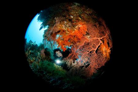 flashlights: Scuba diver behind Gorgonian LANG_EVOIMAGES