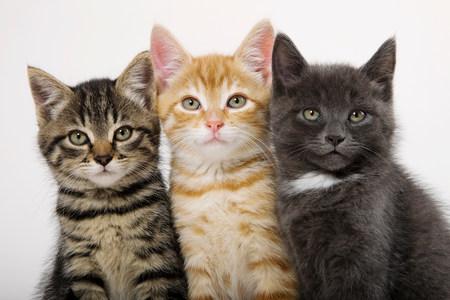 Three kittens side by side
