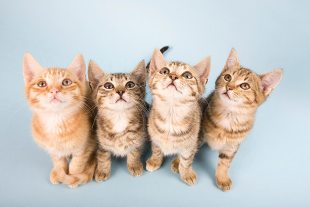 Four cats looking up LANG_EVOIMAGES