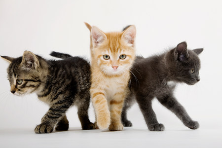 Three kittens with attitude