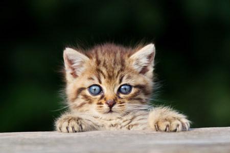 Kitten peeking over fence