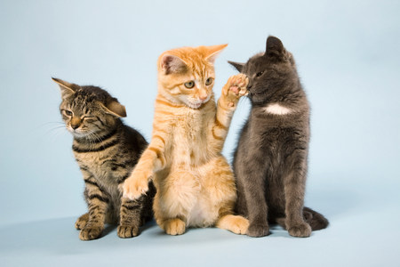 Three cats LANG_EVOIMAGES