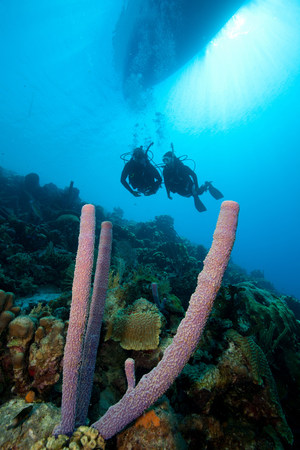 Scuba divers on a sloping wall