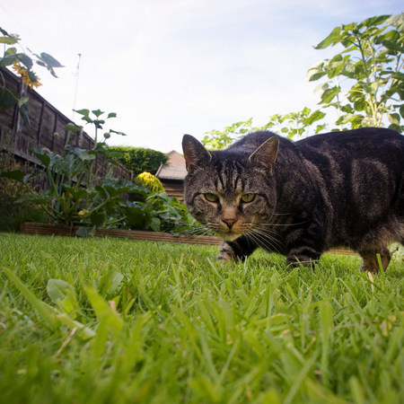 space for type: Cat prowling in garden