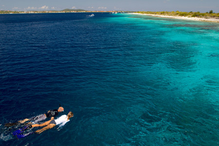 snorkelers: Snorkelers in the Caribbean Sea LANG_EVOIMAGES